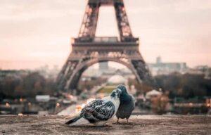 paris tour eiffel pigeons