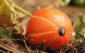 Un kabocha orange