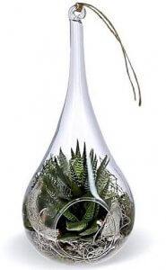 Idée cadeau : un petit terrarium